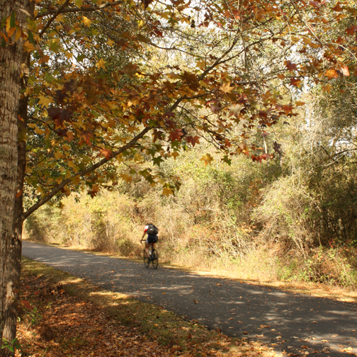 Cyclist on the Tallahassee to St. Marks Historic Railroad State Trail